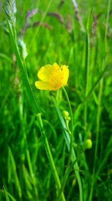 Life_Update_Flower