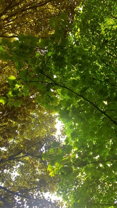 Life_Update_Trees