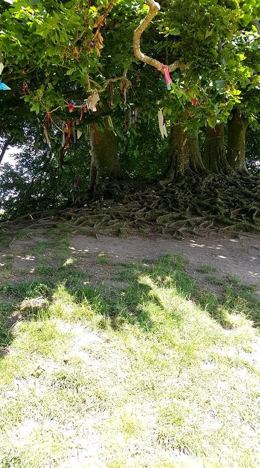 Avebury_Tree