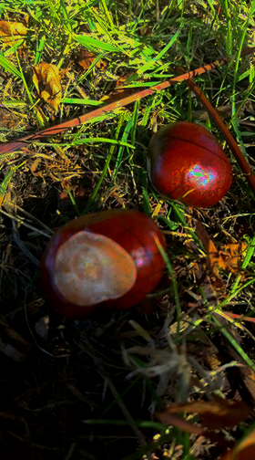Autumn Bucket list conker