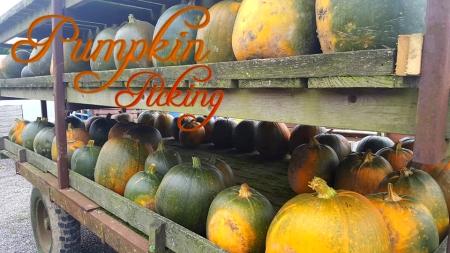 PumpkinPicking17