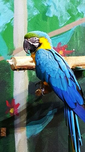 longleat parrots